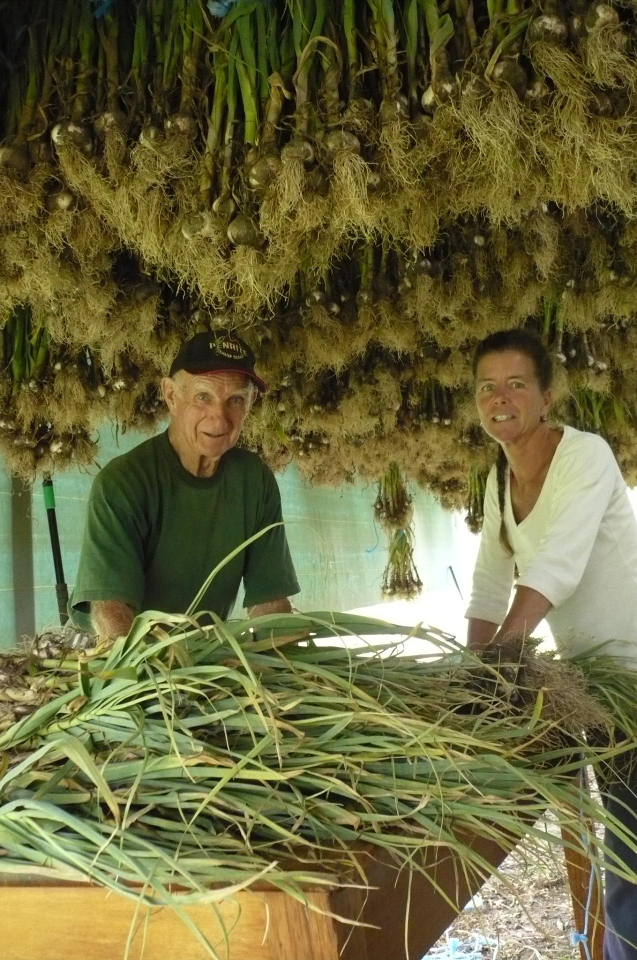 Hung garlic