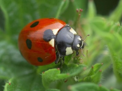 The wilderness and ladybirds