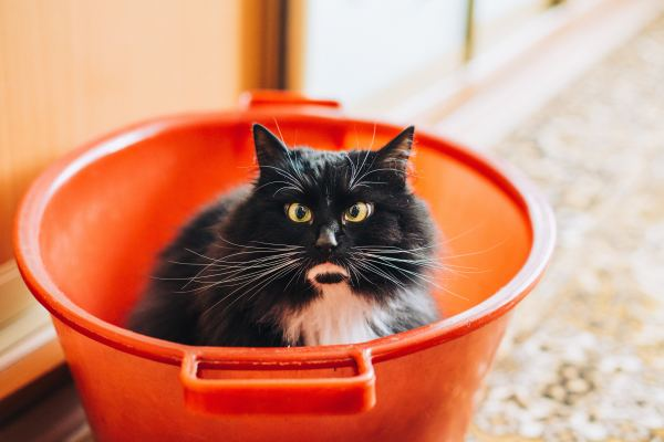 angry cat sitting in an orange bucket