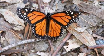 The Dead Monarch