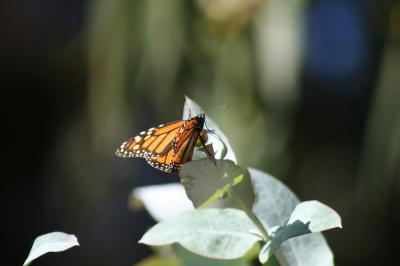 Faith of a Butterfly