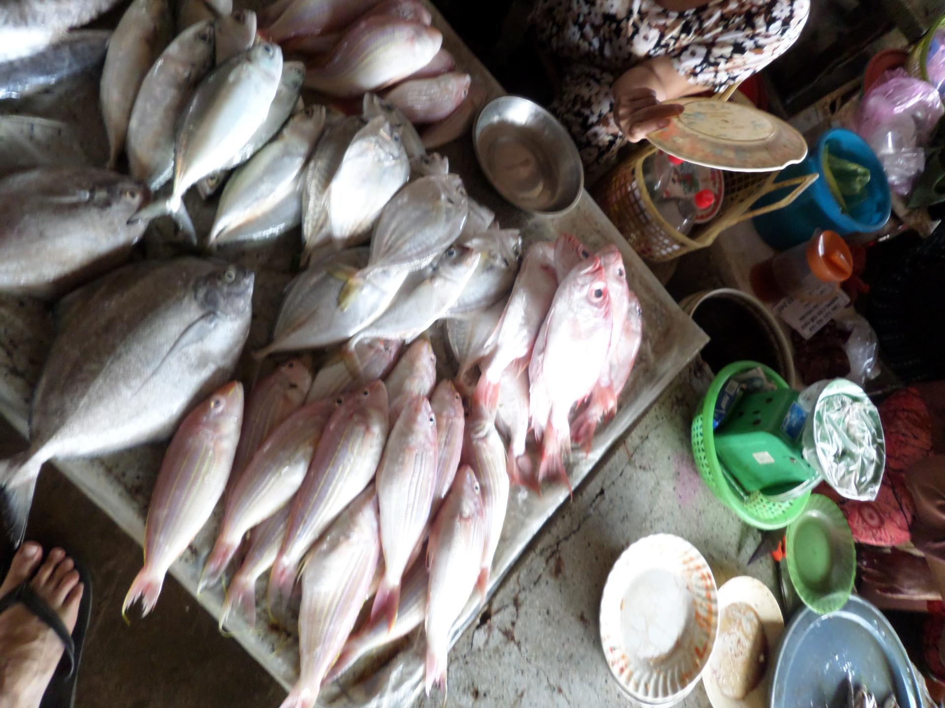 Travelling Snack Restaurant, food van- fish