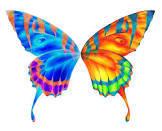 BWP Butterflies