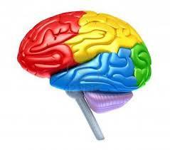 THSA Brains