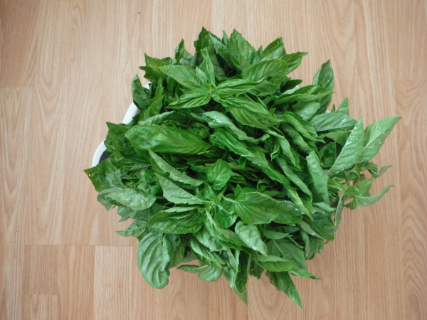 Fresh local Basil from Farmers market here in Oroville