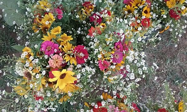 Oroville Farmers Market Flowers