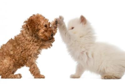 Love Pets?