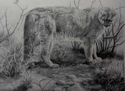 G7-026 Mr Puma