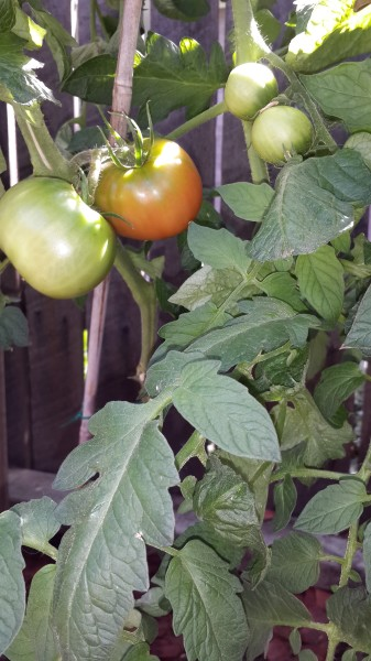 Keeping It Real about an equal partnership, and gardening…
