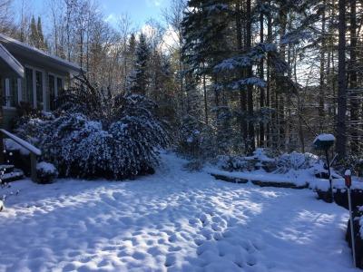 Stillhome Winter Gardens