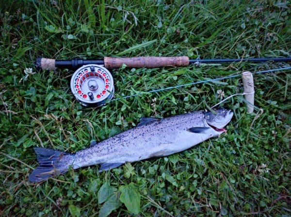 Nice July seatrout.
