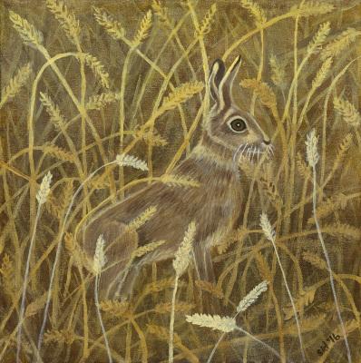 Aesop's Hare