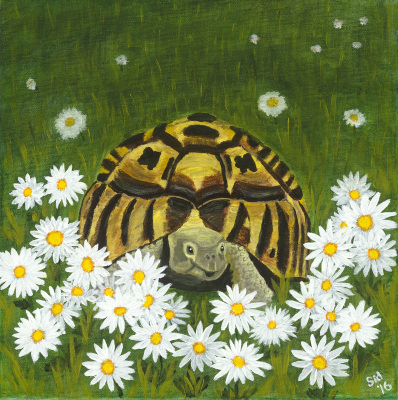Aesop's Tortoise