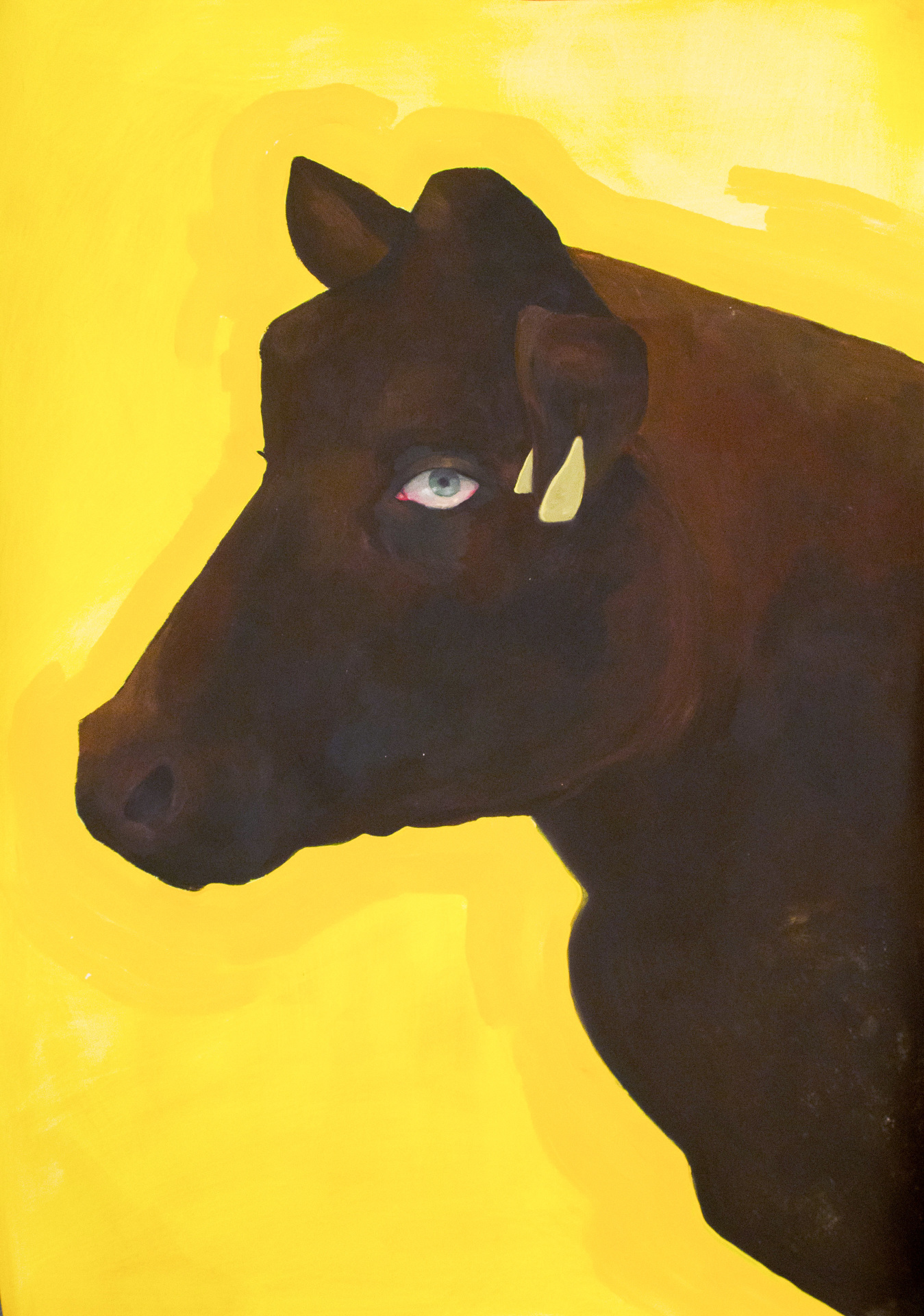 Brown Cow on Yellow Looking Right at You