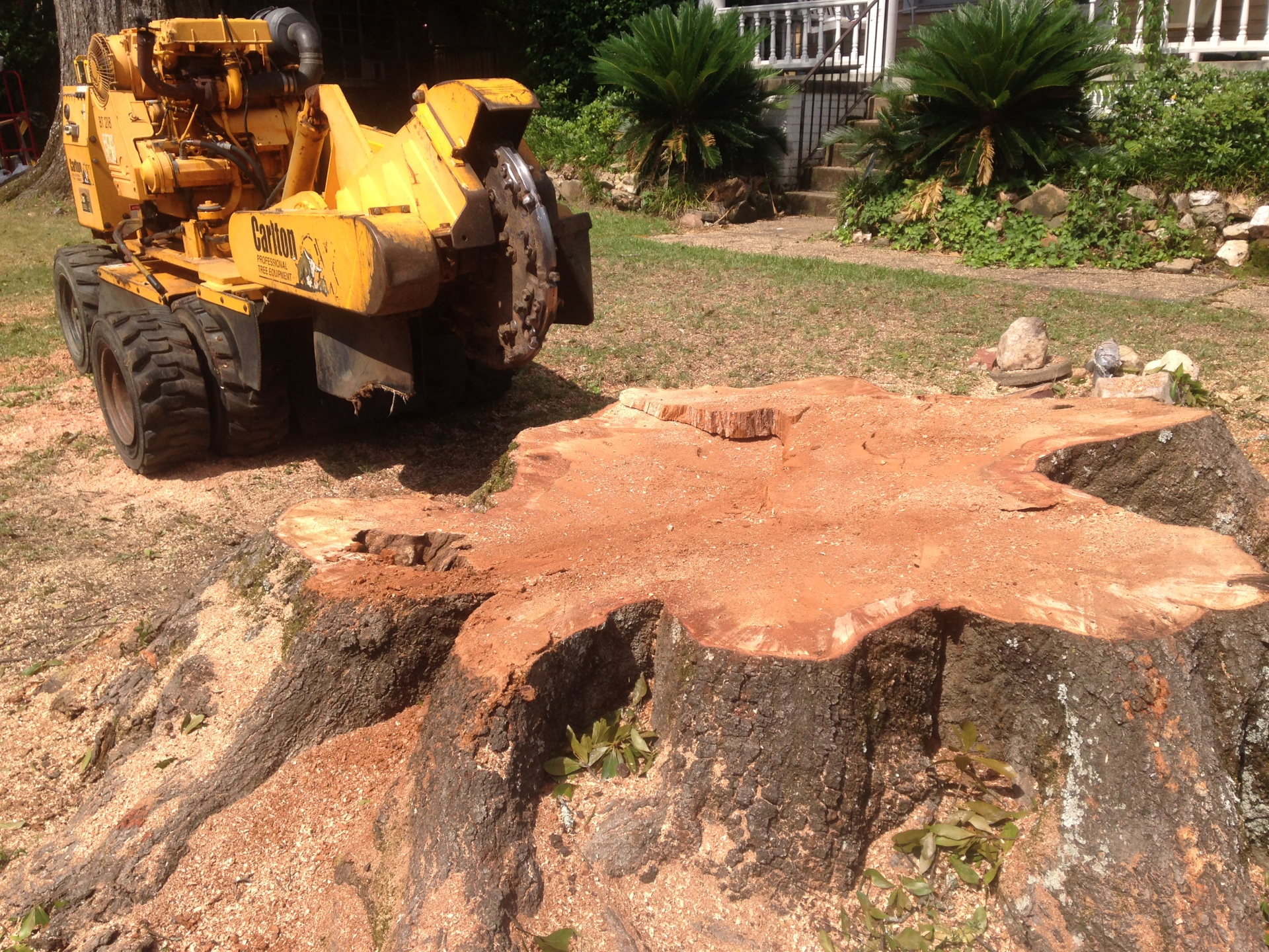 Grinding Stump in Montgomery