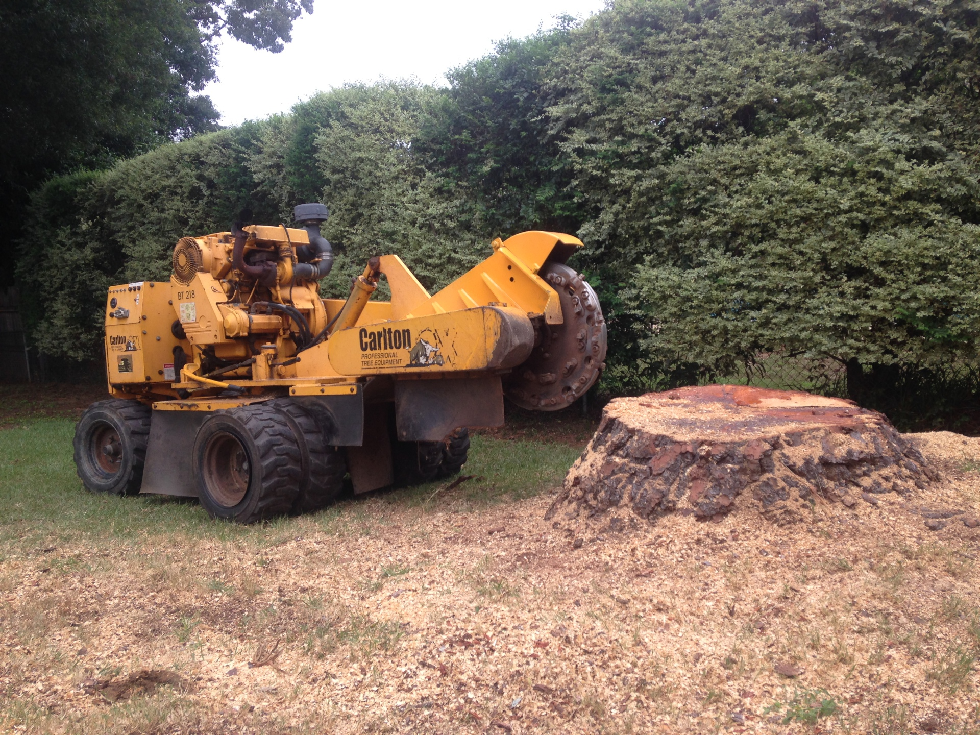 Pine Stump Removal in Montgomery