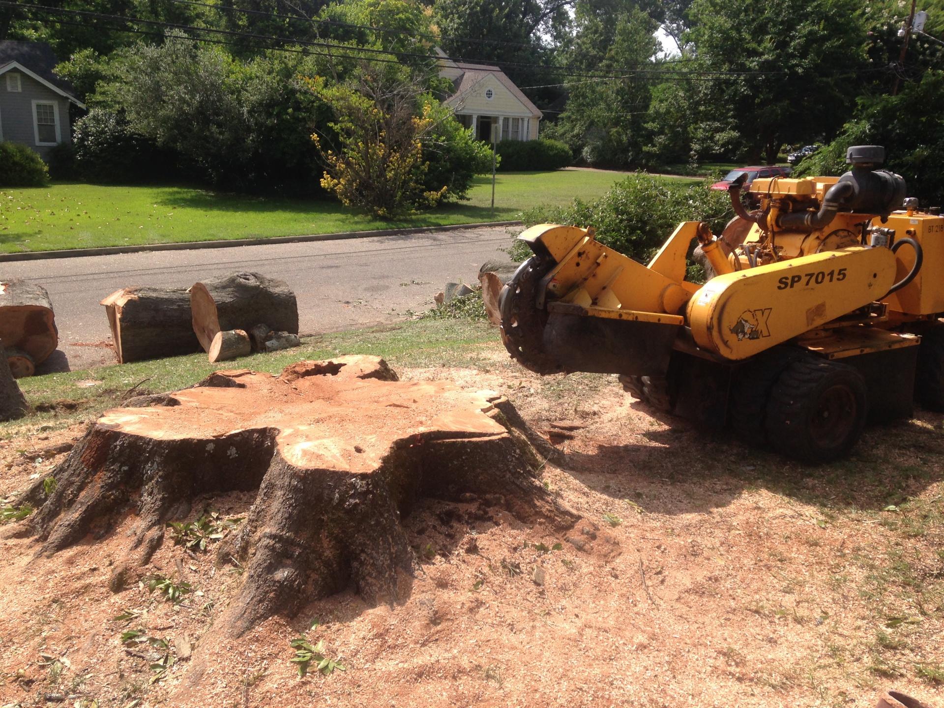 Giant Stump in Montgomery