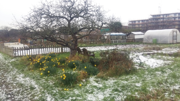 Winter scene of apple tree on Plot 48
