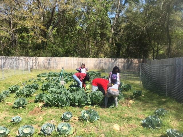 Kids: Community Garden Harvest - Spring 2017 - Magnolia Terrace