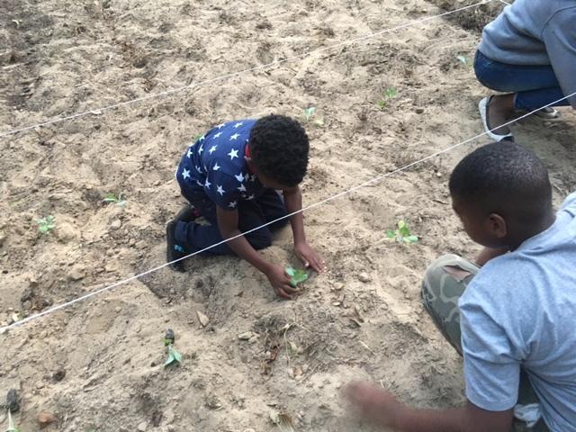 Kids: Community Garden Planting  - Magnolia Terrace