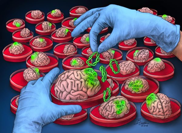 Growing Brain Cancer in Petri Dishes