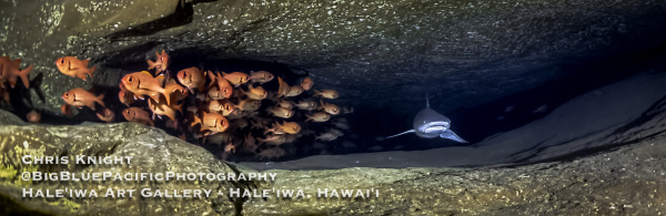 Red Fish and Shark Moku Manu Cave Chris Knight