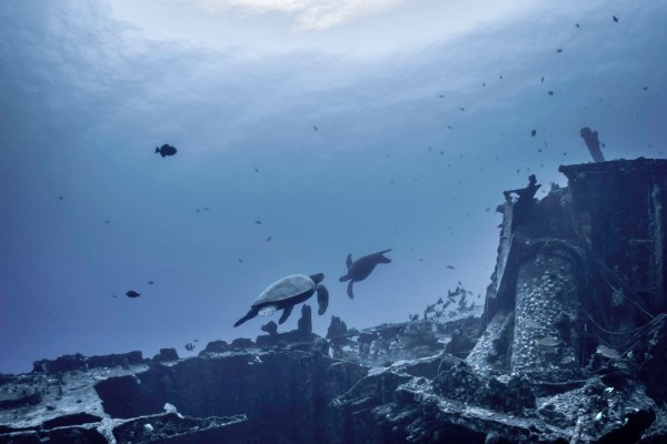 turtles playing on san pedro shipwreck