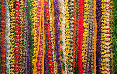 Lei of Love Ed Furuike