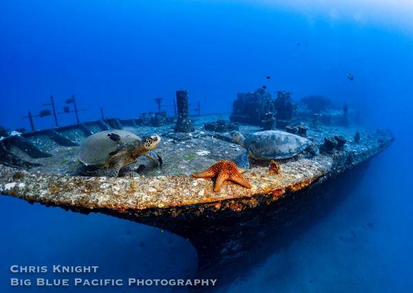 Sea Turtles on Sea Tiger Shipwreck Chris Knight