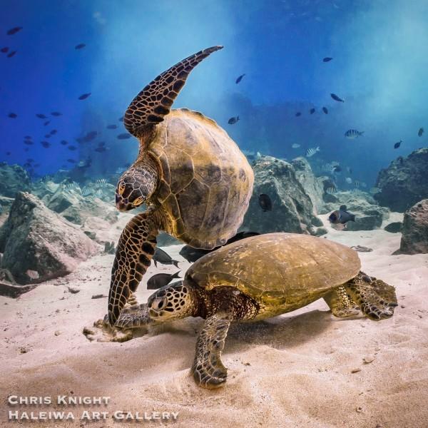 turtles playing on san pedro shipwreck