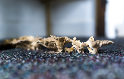 Carpet Shrooms