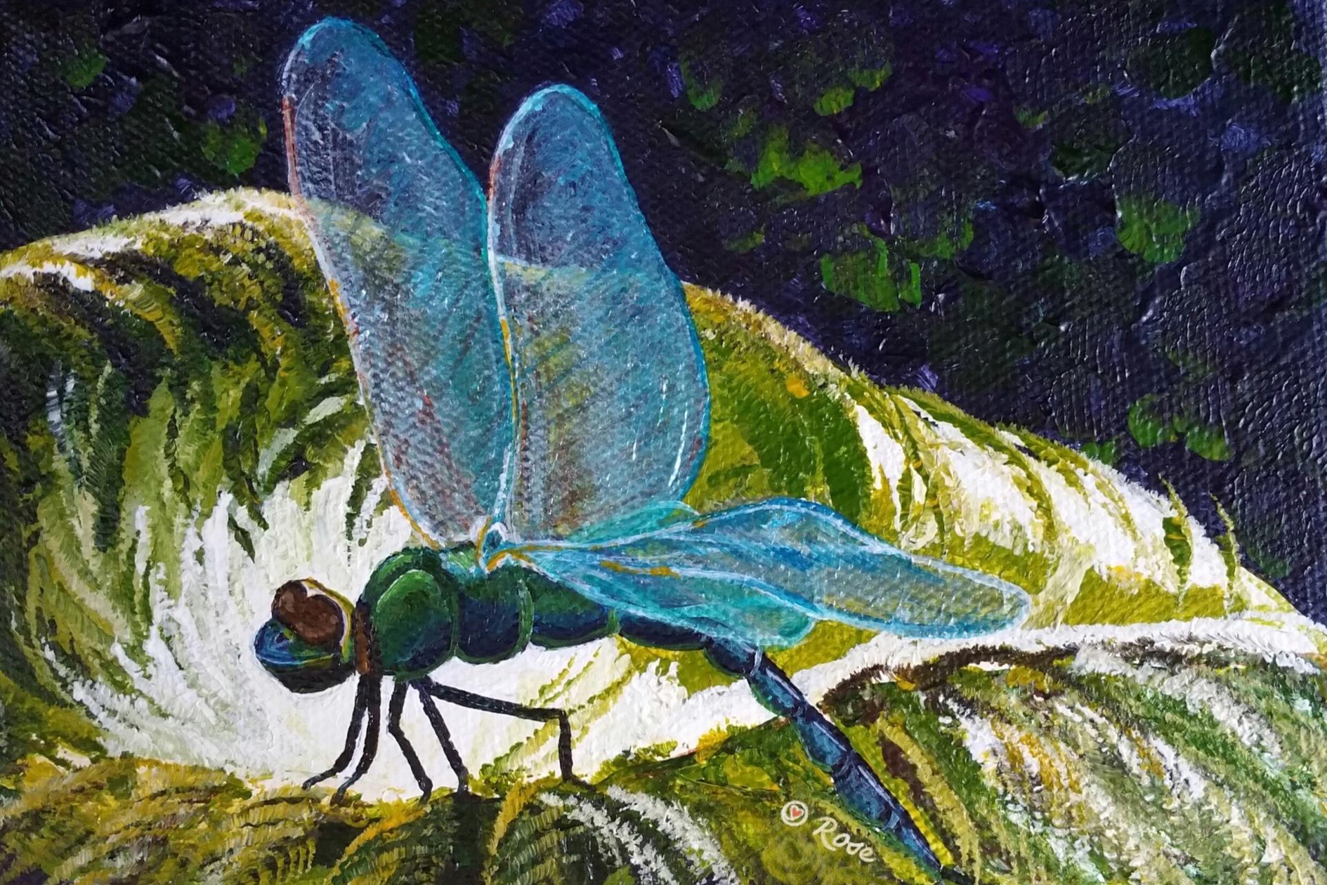 Hawaiian Dragonfly