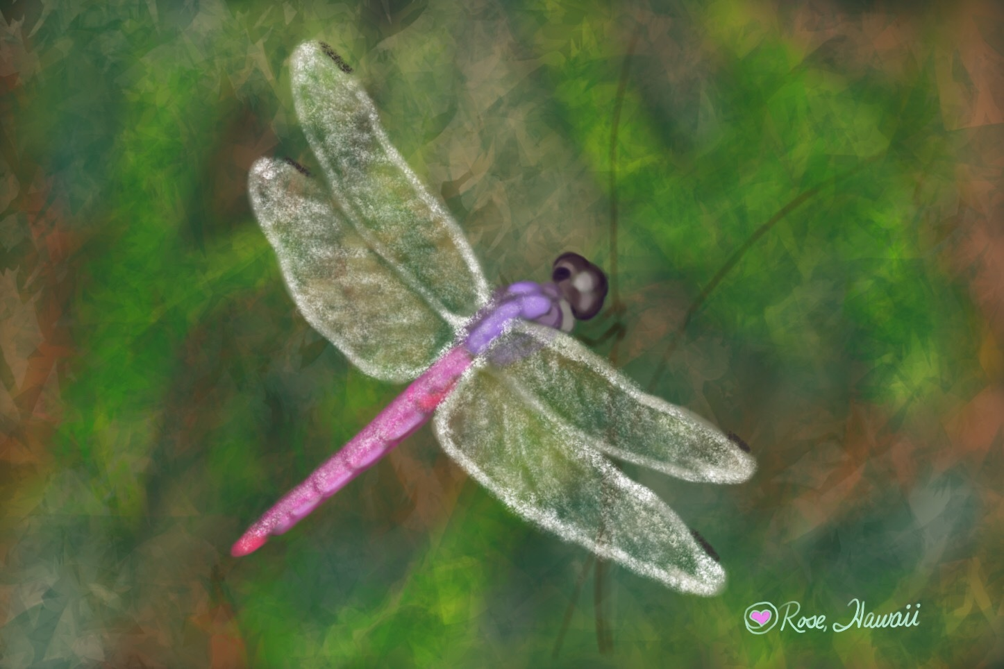 Pink Hawaiian Drafonfly