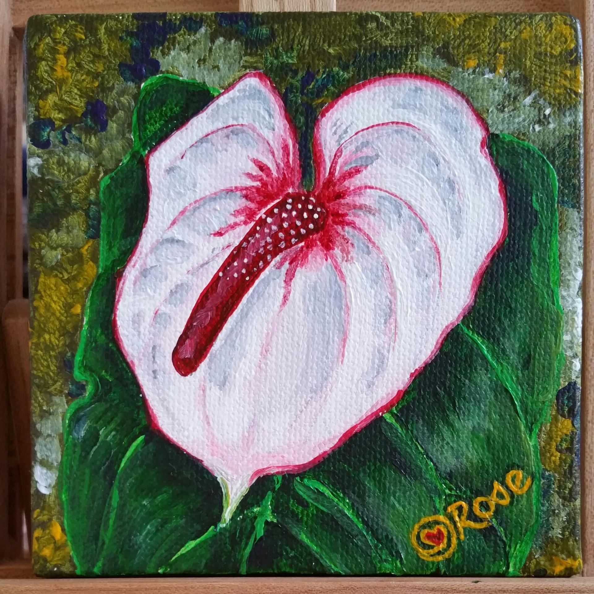 """White Anthurium 4""""x4"""" canvas"""