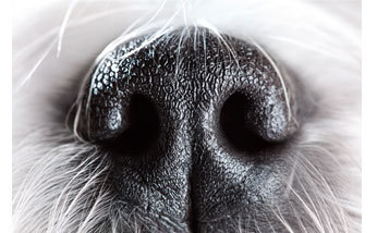 Linguagem Olfativa - A comunicação por odores