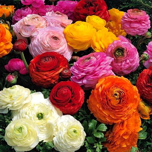 Colorful Flower San Diego Garden Design