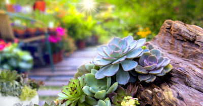 Water Your Plants Even Succulents In The Summer