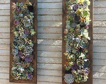 Succulent Wall Garden Planter