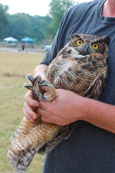 Release of Rehabilitated Owl