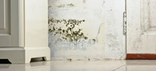 Mold Damage Restoration, Removal and Clean Up Indianapolis