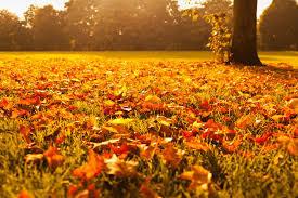 Your Fall Seasonal Checklist