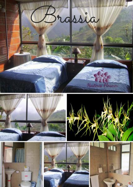 Room # 6 BRASSIA: Habitación doble con vista a la montaña y baño privado.
