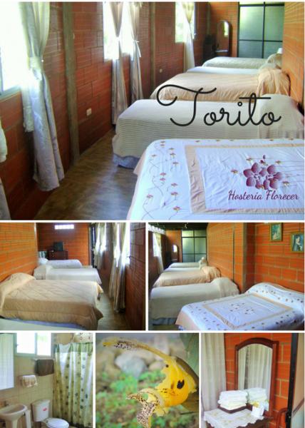 Room # 8 TORITO: Habitación familiar (quíntuple) con vista a la montaña y baño privado.
