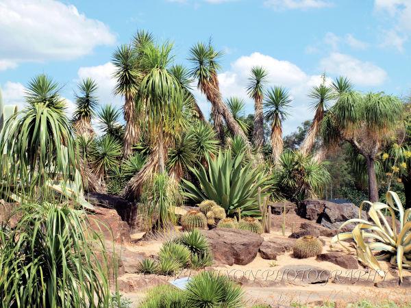 botanic gardens, cactus, landscape, photography