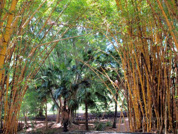 bamboo, botanical gardens, landscape, photography