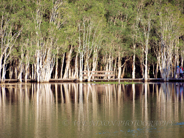trees, lake, lagoon, reflections, landscape, photography