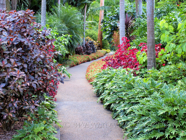 garden, pathway, botanical gardens, landscape, photography, plants