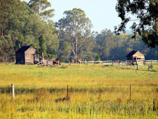 farmland, sheds, fence, cows, trees, grass, landscape, photography