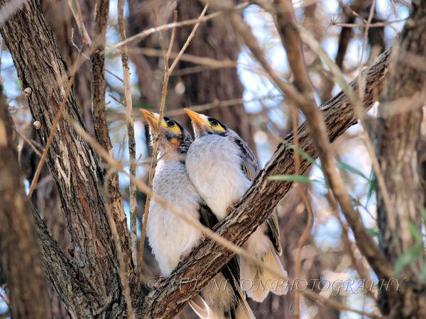 baby's, birds, wildlife, backyard, photography