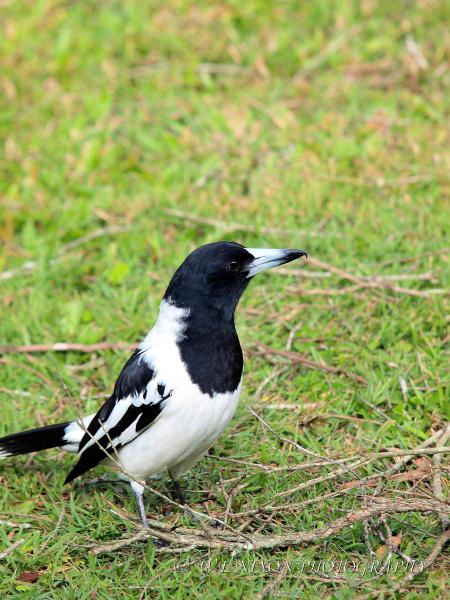 bird, wildlife, black and white, photography